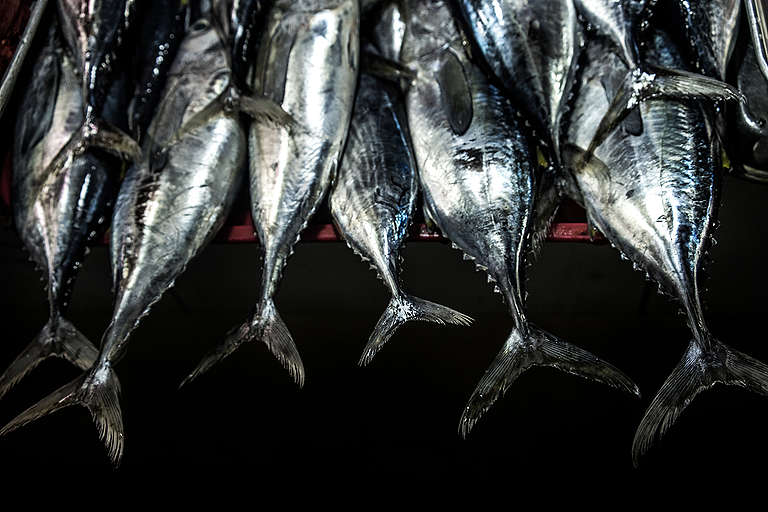 Juvenile Tuna in Market in the Philippines. © Sanjit Das / Greenpeace