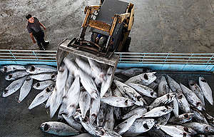 Fish Market in Taiwan. © Alex Hofford / Greenpeace
