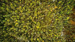 Aerial View over Forest near Lake Blecktjärnen in Sweden. © Edward Beskow / Greenpeace