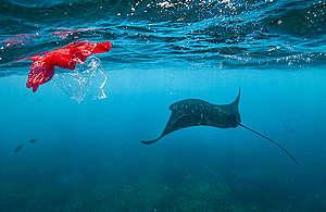 Manta rays off Nusa Penida Island. © Paul Hilton / Greenpeace