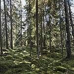 Rädda mångfalden av liv i skogen