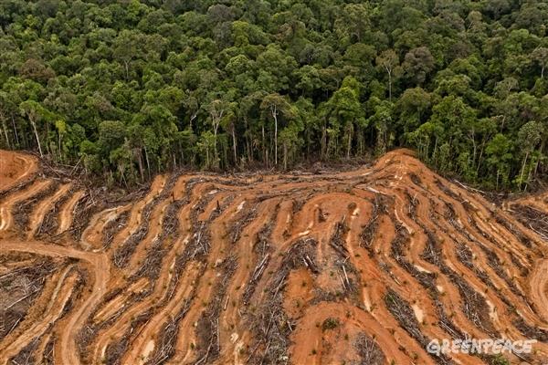 Regnskogsskövling i Indonesien
