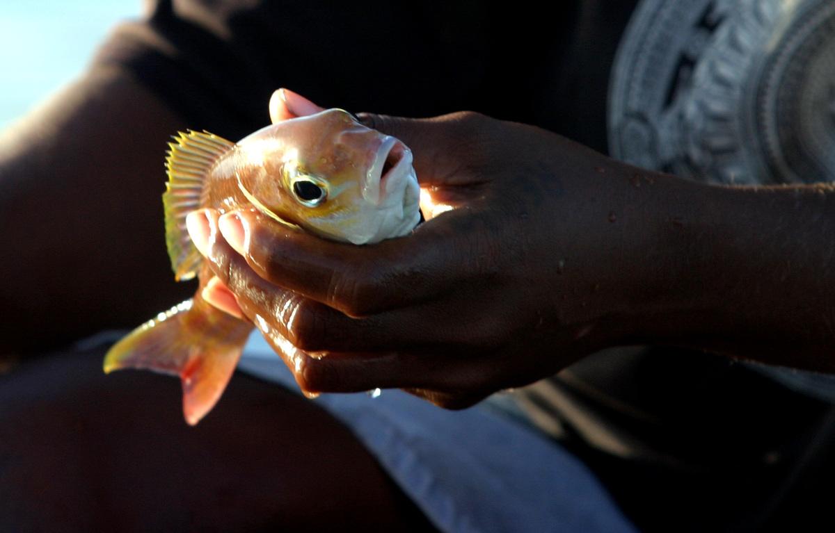 Fisheries in the Western Pacific Ocean. © Natalie Behring