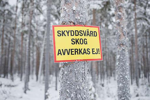 Action to Protect Swedish Forest Landscape Ore Skogsrike. © Christian Åslund