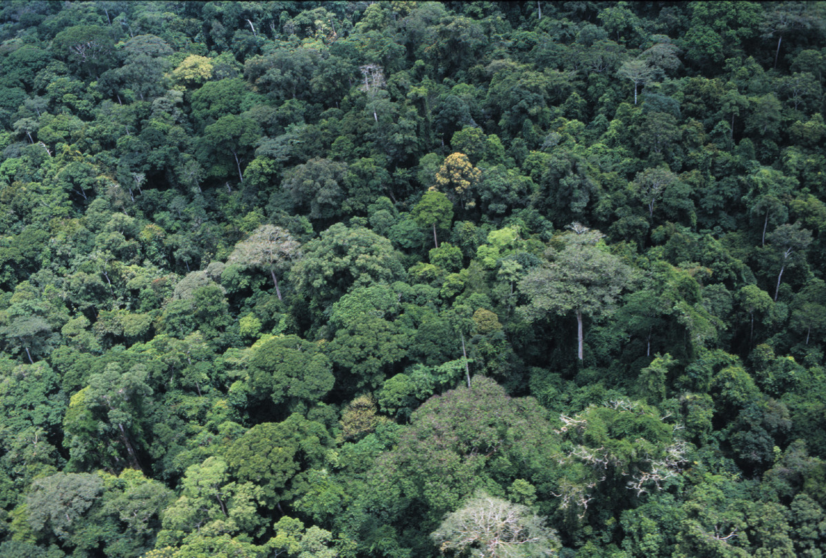 View of rainforest, Cameroon. © Steve Morgan