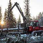 Logging in Torråsen. © Jannes Stoppel / Greenpeace