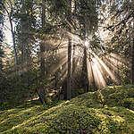 Ny inventering visar: Sveaskog avregistrerar värdefull skog