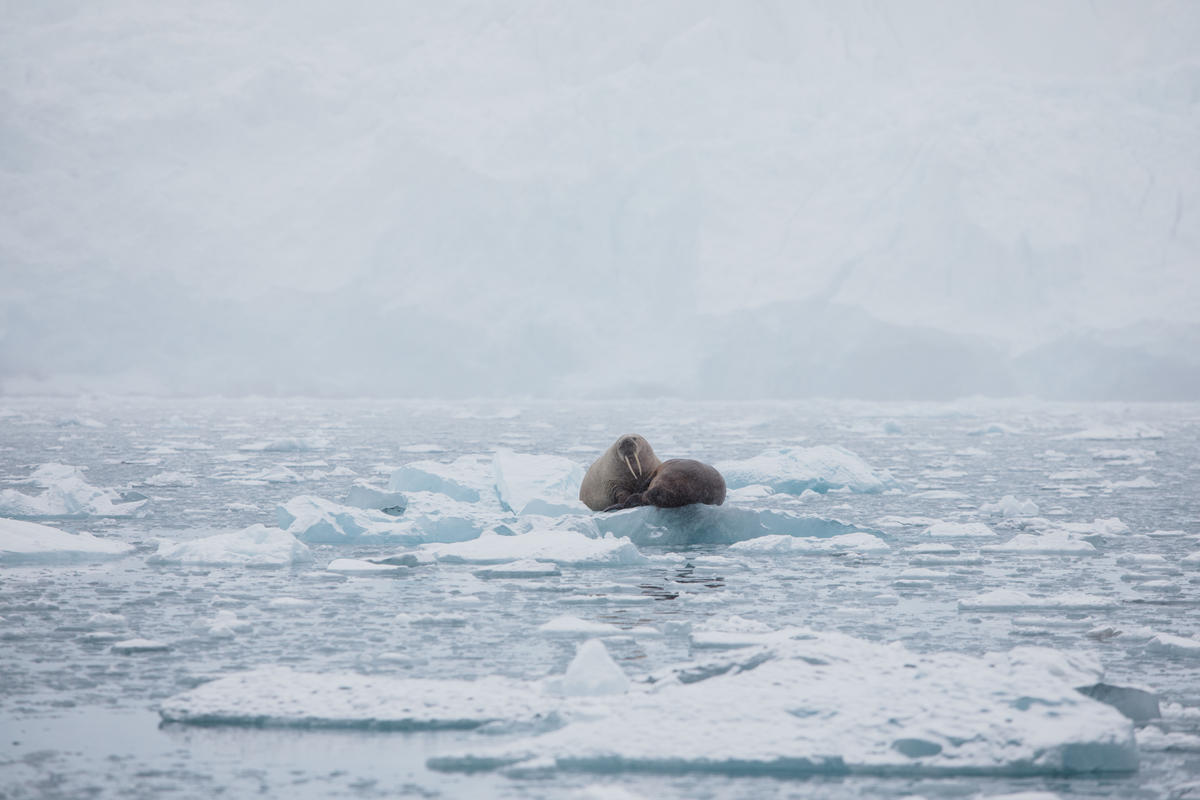 Protect the Oceans Expedition - Arctic Leg. © Denis Sinyakov / Greenpeace
