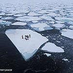 Ny forskningsstudie varnar: Ett upphettat klimat kan få hela den Arktiska näringskedjan ur balans