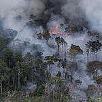 Greenpeace kommentar gällande skogsbränderna i Amazonas