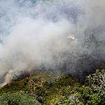 Amazonas brinner