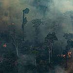 Därför brinner Amazonas regnskog