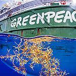 Greenpeace expedition avslöjar rekordhöga nivåer av plastföroreningar i Sargassohavet
