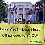 """Greenpeace om IPCC:s rapport: """"Sverige måste skydda en femtedel av skogen och minska köttkonsumtionen med 90 %"""""""