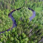 Efter 20 års kampanj – i dag blev den ryska Dvinskyskogen skyddad!