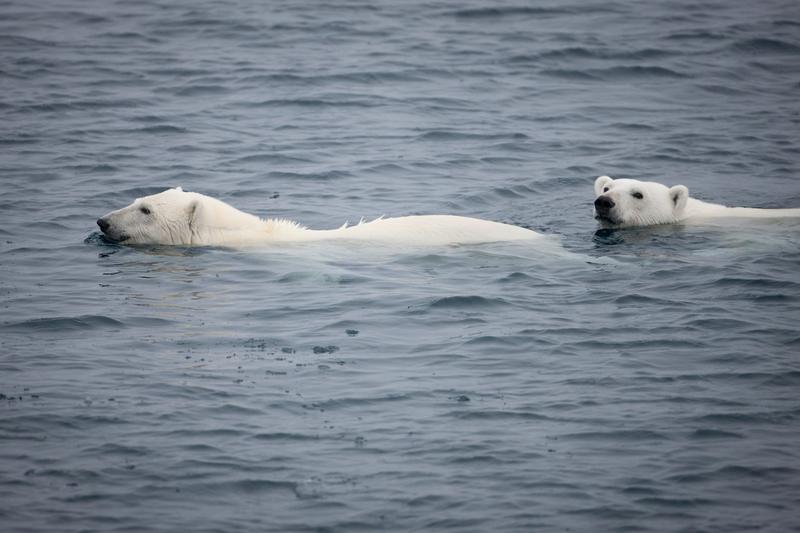 Nya rapportens chocksiffror: Klimathotet slår hårt mot Arktis