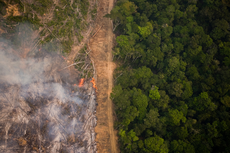 amazonas regnskog eldas för industriellt jordbruk
