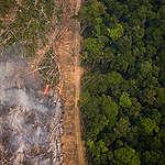 Krisläget i Amazonas förvärras i takt med pandemin