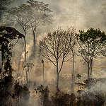 Skogsbränderna i Amazonas ökar igen