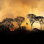 Högsta antalet bränder i Amazonas på ett decennium