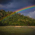 Varför är det så viktigt att vi räddar Amazonas? 5 vanliga frågor och svar