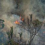 Bränderna i Amazonas och Pantanal slår nya rekord i september