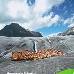 Greenpeace Schweiz Jahresbericht 2007