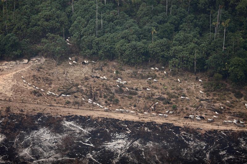 Weiterhin Abholzung und Sklaverei in brasilianischer Viehwirtschaft