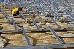 Solarmacher packen an für die grösste Photovoltaikanlage der Deut