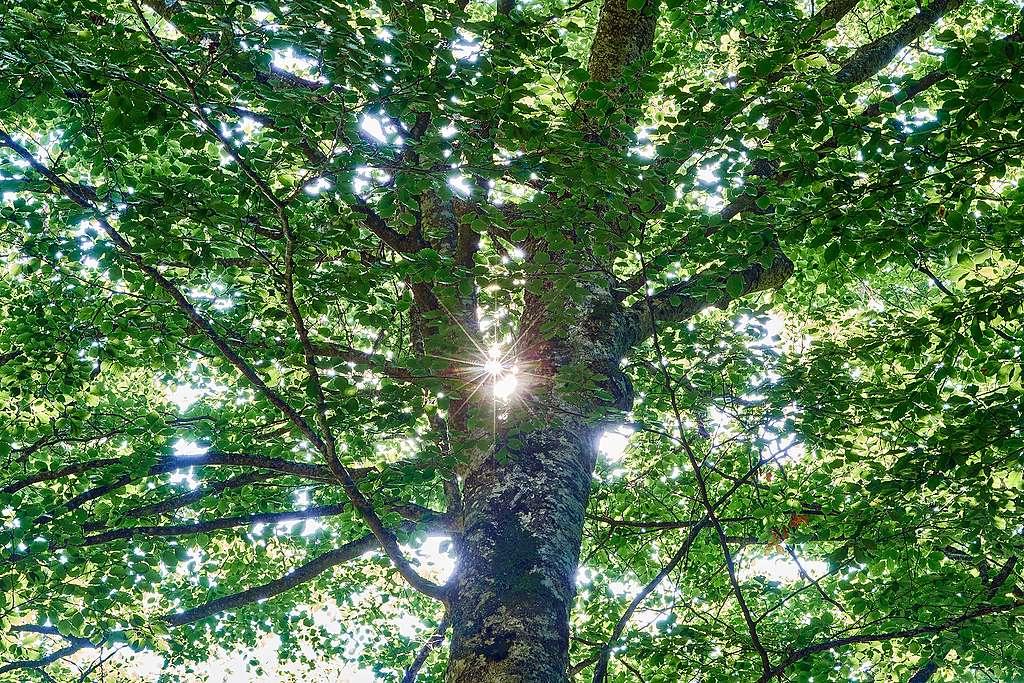 Protection des forêts: Greenpeace Suisse mise sur l'indépendance à l'égard du FSC