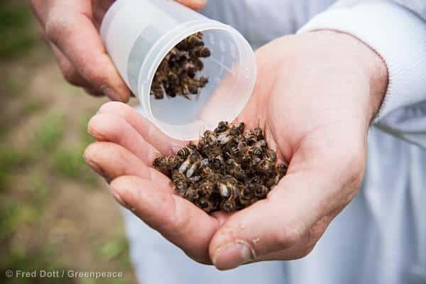 Was war die Ursache des Bienensterbens in Ungarn?