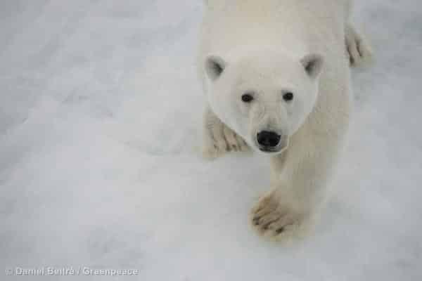 Zwei Millionen wollen Arktisschutz  / Shell scheitert mit Millionenklage