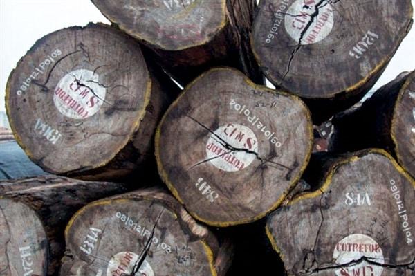 Exploitation forestière illégale en RDC: exporter le chaos