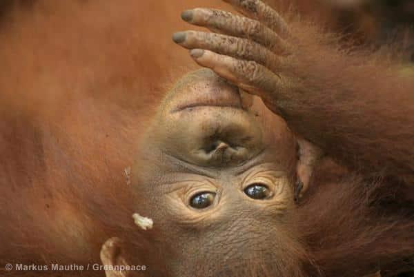 Durchzogene Bilanz zu Urwaldrodungen in Indonesien