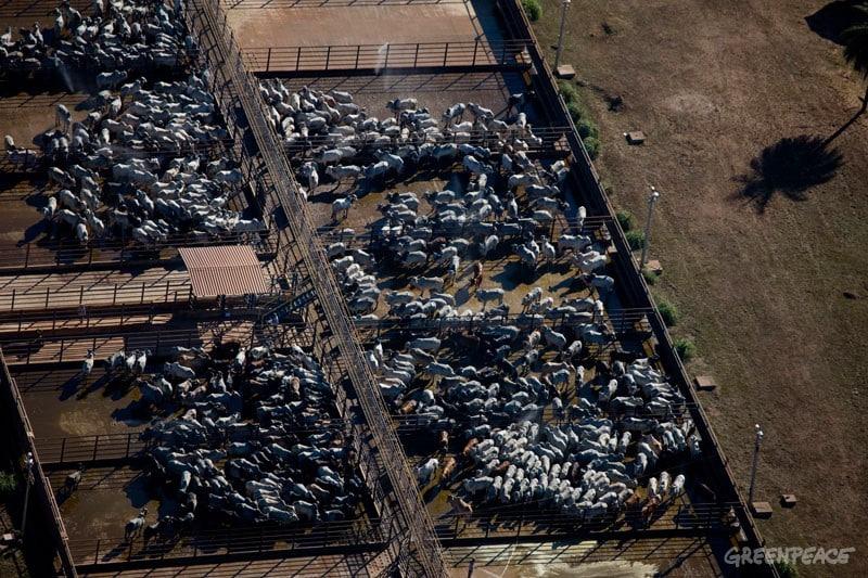 Amazonas: Leder- und Fleischerzeuger Bertin lenkt ein