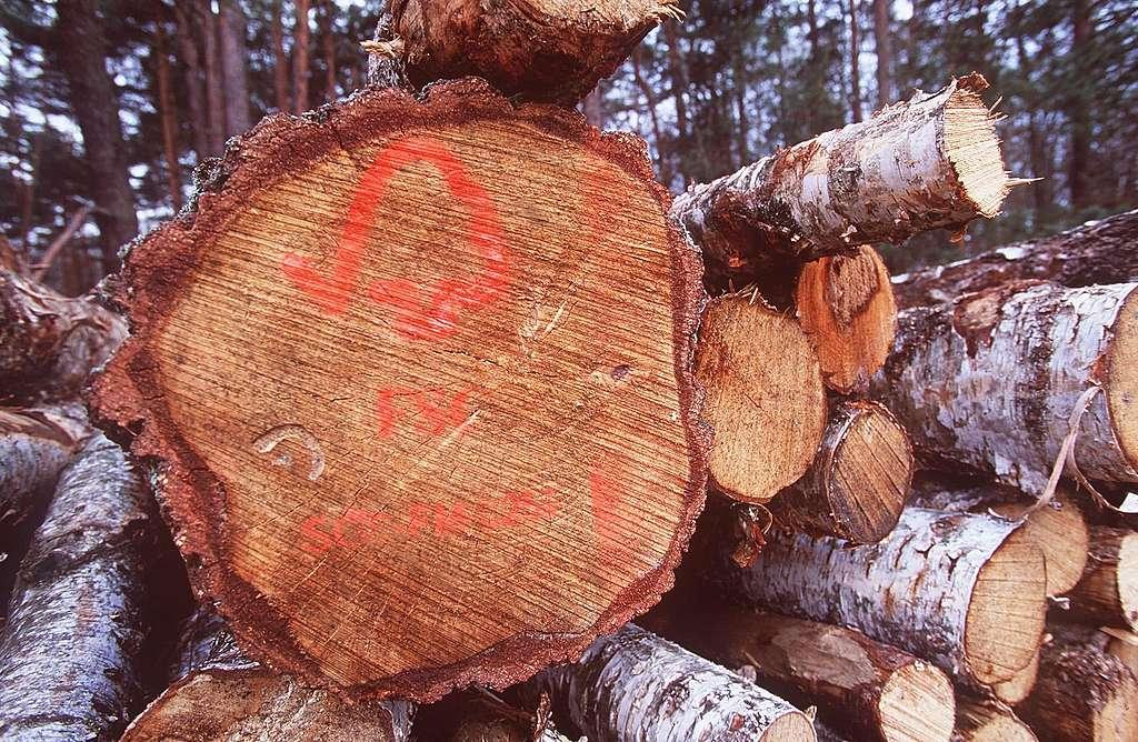 FSC: Schutz oder Ausbeutung der Urwälder?