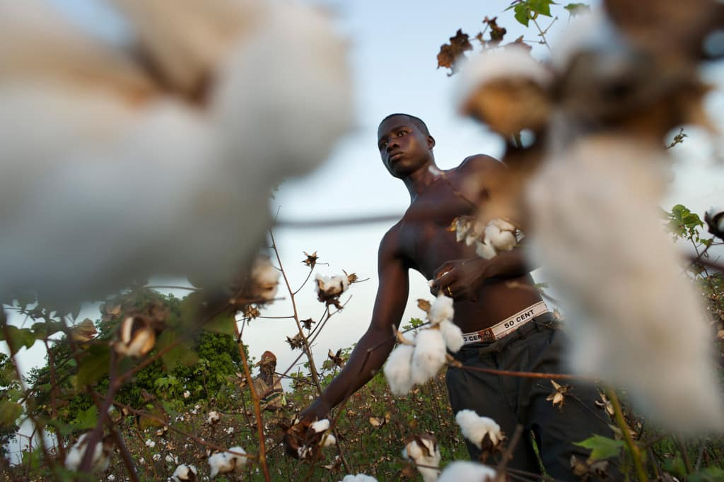 Martin picks the cotton on his uncles farm.Since the Swiss organization Helvetas started the organic cotton project in Naniagara the farmers prosper as organic farming improves their financial situation. Although organic cotton needs more labor, and in t