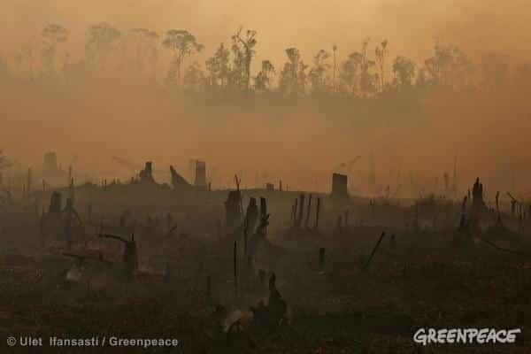 Indonesien: Brände in Ölpalmenanbaugebieten