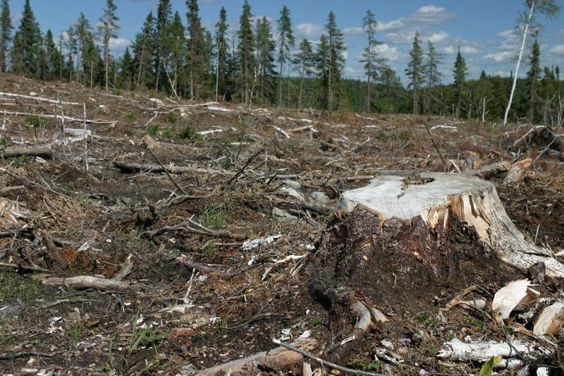 Tatort borealer Wald