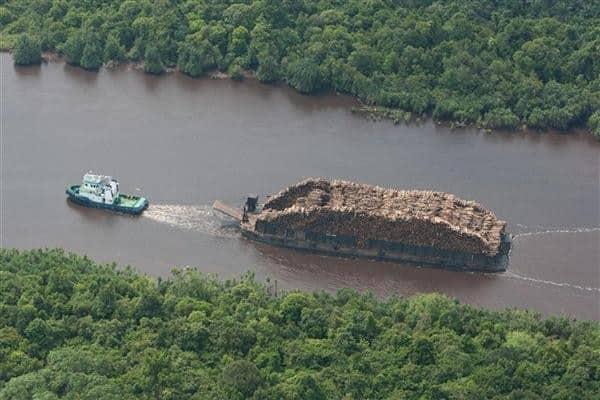 APP findet neues Zuhause für Tiger, hat aber dessen Heimat selbst zerstört