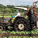 Risques environnementaux des pesticides néonicotinoïdes