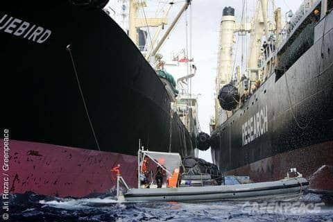 Panama sanktioniert Tankschiff der japanischen Walfangflotte