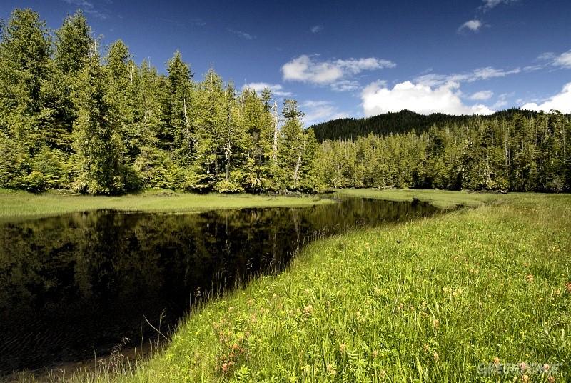 Entente historique pour protéger la forêt boréale du Canada