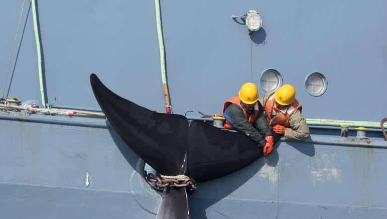 Interview mit Meeresexperte Thilo Maack zum Waljagdverbot in der Antarktis