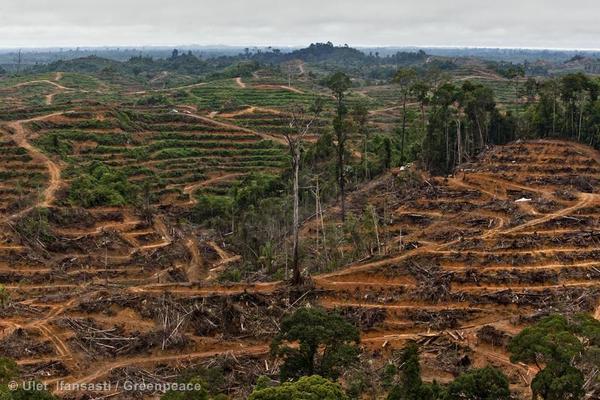 Urwälder weltweit dramatisch am Schwinden