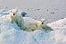 Die wunderschöne Eiszeit des Nordens