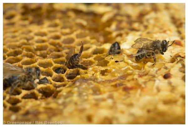 EU-Kommission setzt Pestizid-Verbot zum Schutz der Bienen um