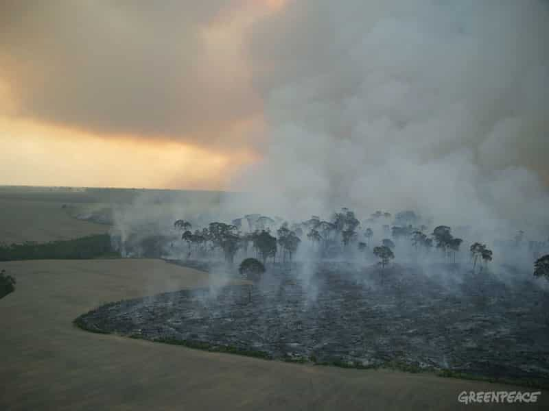 Amazonas-Bundesstaat Parà: Abkommen soll illegale Abholzung stoppen