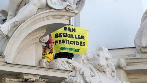 Bienensterben: EU-Lebensmittelsicherheitsbehörde schlägt erneut Alarm