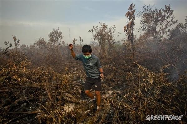 © Greenpeace